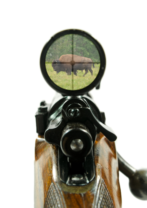 Boeing buffalo hunt